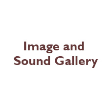 Image and Sound Gallery